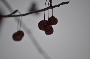 Same berries after the frost