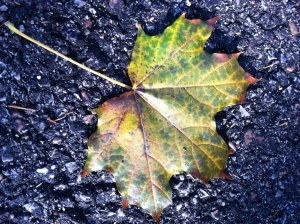 Random shot--beautiful leaf on my driveway
