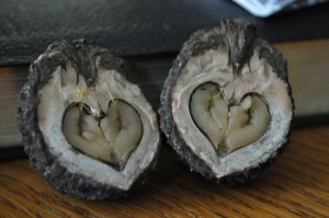 Just for fun--When PJ cracked this nut open, he found a heart!