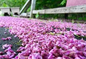 flowers on asphalt