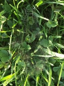 I chose this picture (taken recently at the dog park early in the morning) because it's beautiful for one thing and it also gives me a visual of unity. All the lines of the web meet and lead to the center.