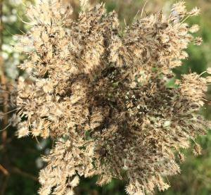 dry flower 2