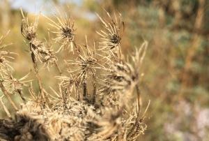 dry flower 4