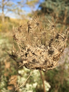 dry flower 5